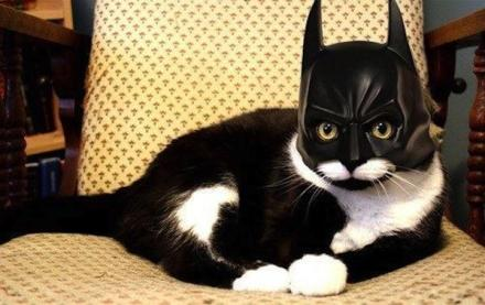 cat-costume-batman